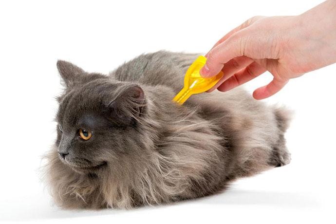 Как капать капли отблох кошке?