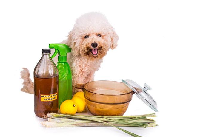 Народные средства от блох для собак
