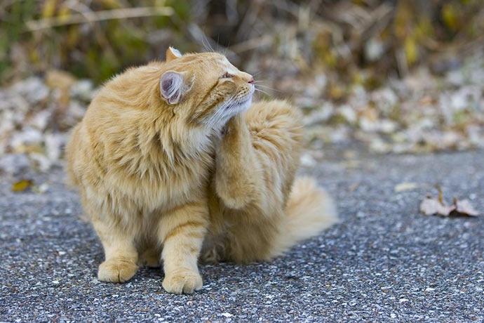 Как понять что у кота блохи