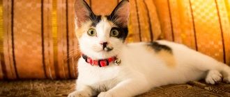 Как узнать есть ли у кота блохи