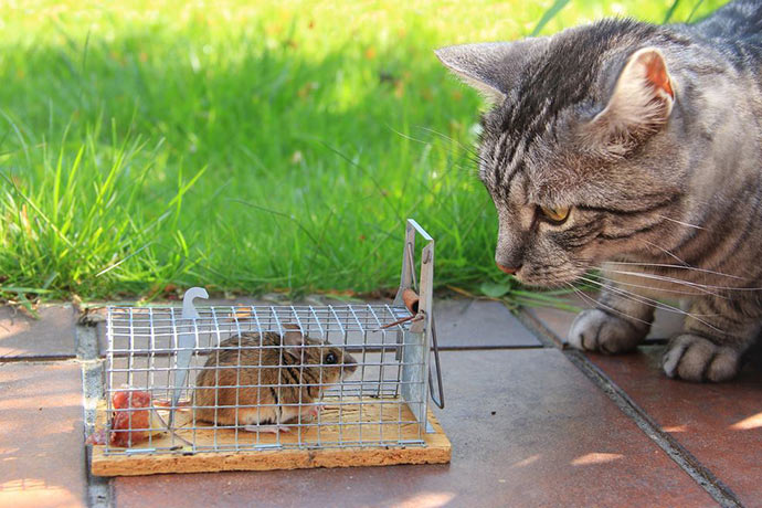 Живоловушка для мышей