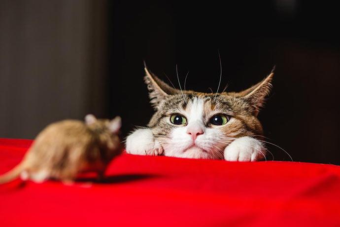 Каких животных боятся мыши