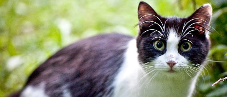 Народное средство от блох для котят