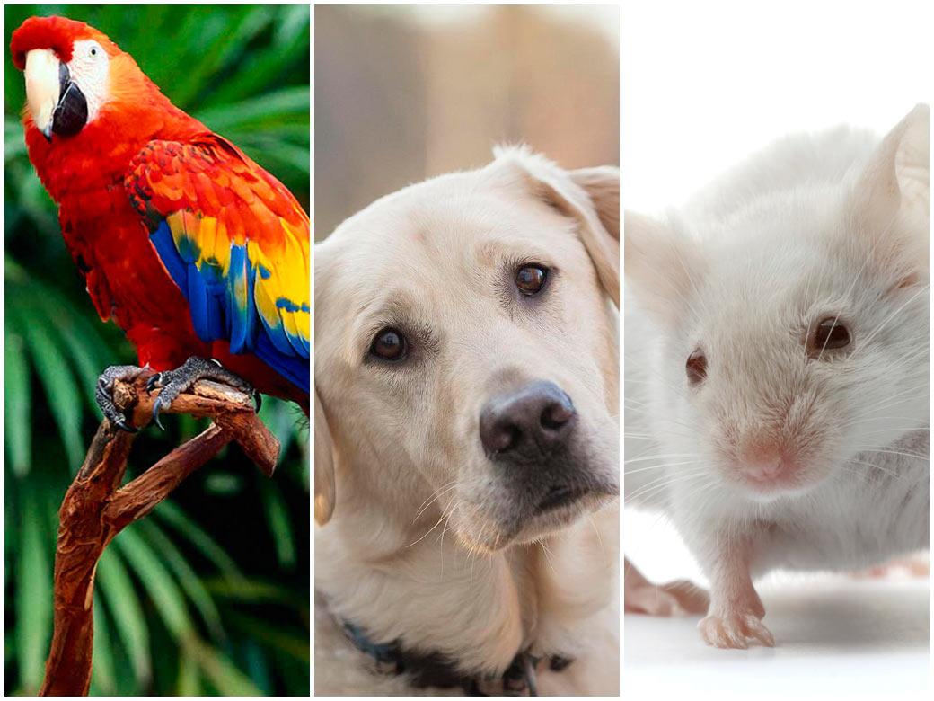 Животные — переносчики клопов